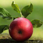 Ernährungsberatung Vitalität Wohlbefinden Gesundheit Energie